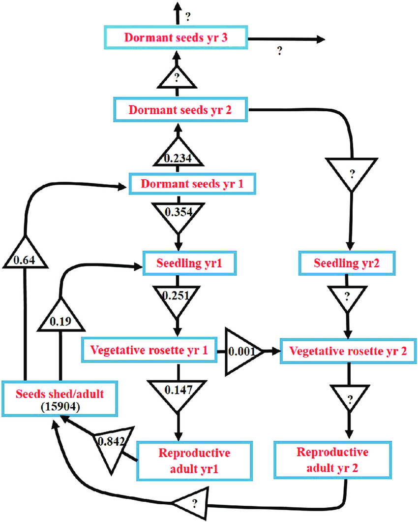 hight resolution of a life cycle diagram of growth phases in parthenium an annual weed of great significance