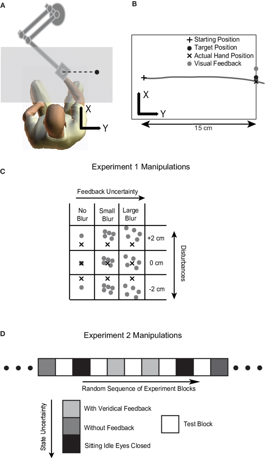 llustration of the experimental setup and procedures. (A