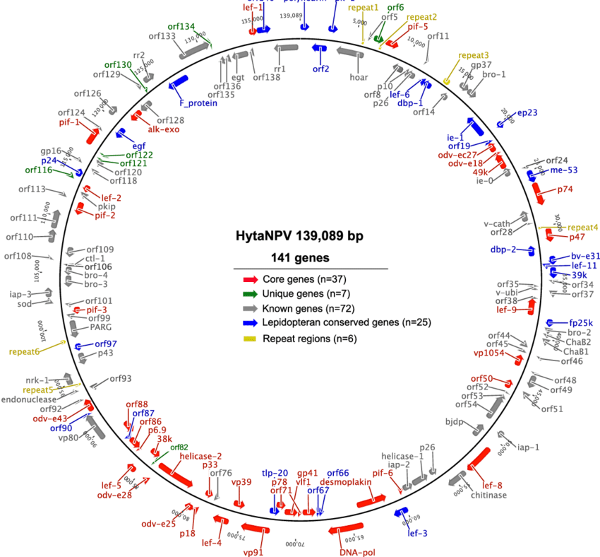 3 arrow circle diagram galls wig wag wiring circular of the hytanpv genome and annotation arrows represent position direction orfs first orf orf1 is polyhedrin gene