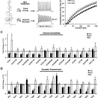 (PDF) N-methyl-D-aspartate receptors mediate activity