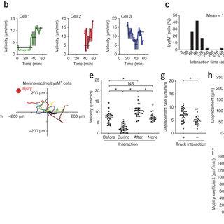 (PDF) Capillary and arteriolar pericytes attract innate