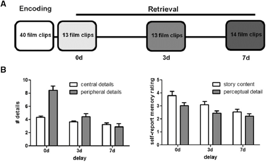 Time-dependent loss of memory for peripheral details. (A