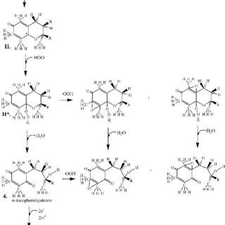 (PDF) Vitamin E models. Can the anti-oxidant and pro