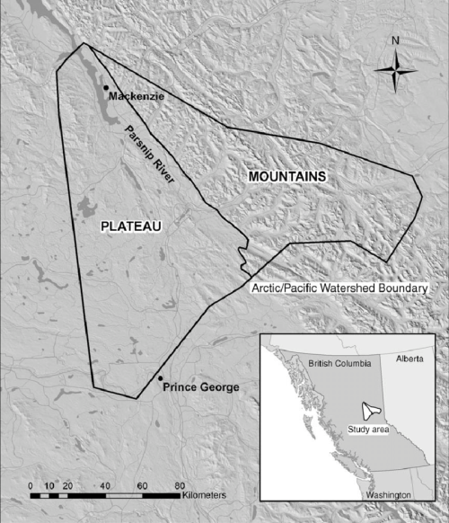small resolution of study area for grizzly bear habitat selection including mountain and plateau boundary just east of