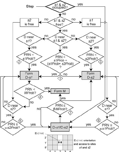 A diagram of the logic followed by each metabolic enzyme