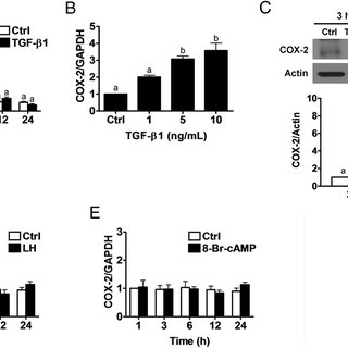(PDF) TGF-beta 1 Induces COX-2 Expression and PGE2