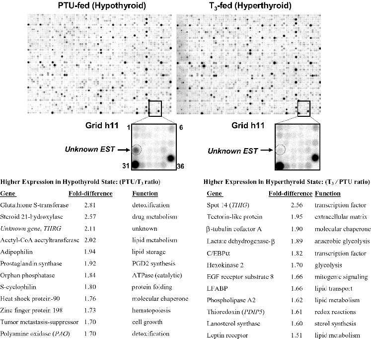 Systems-wide Chicken DNA Microarrays, Gene Expression