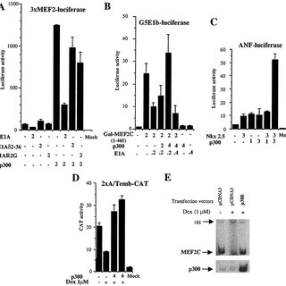 Doxorubicin increases p300 degradation and inhibitors of