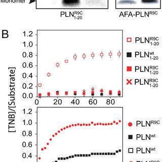PKA-C phosphorylation reaction and SERCA inhibition assays