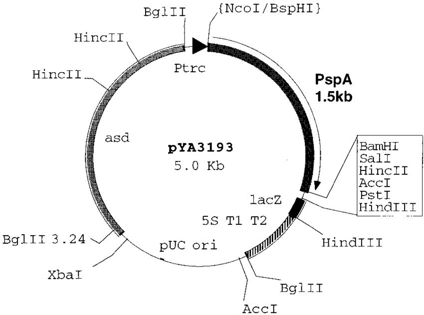 Addgene Plasmid Cloning By Restriction Enzyme Digest