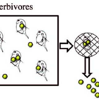 (PDF) Food Chain Transport of Nanoparticles Affects