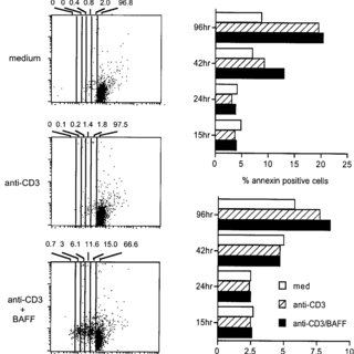 rBAFF costimulates the proliferation of naive and memory T