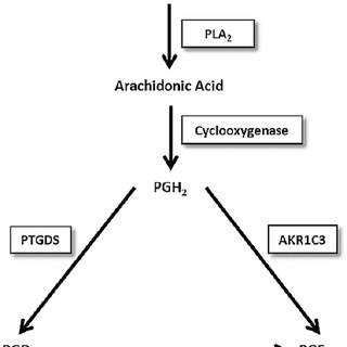 The arachidonic acid cascade and prostaglandin metabolism