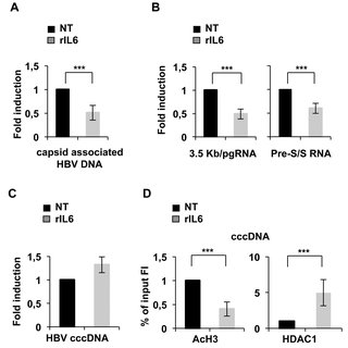 (PDF) IL6 Inhibits HBV Transcription by Targeting the