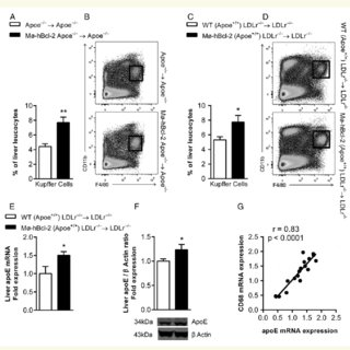 (PDF) Promoting macrophage survival delays progression of