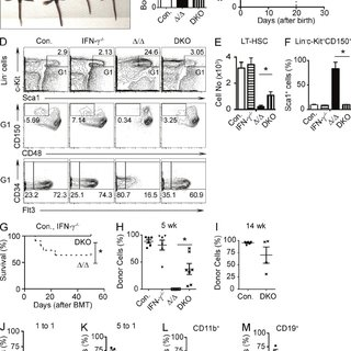 Figure 6. Increased IFN- signaling in A20-deficient HSCs