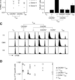 proliferation history in vivo turnover and recall responses of cd4 memory t cell subsets [ 850 x 1164 Pixel ]