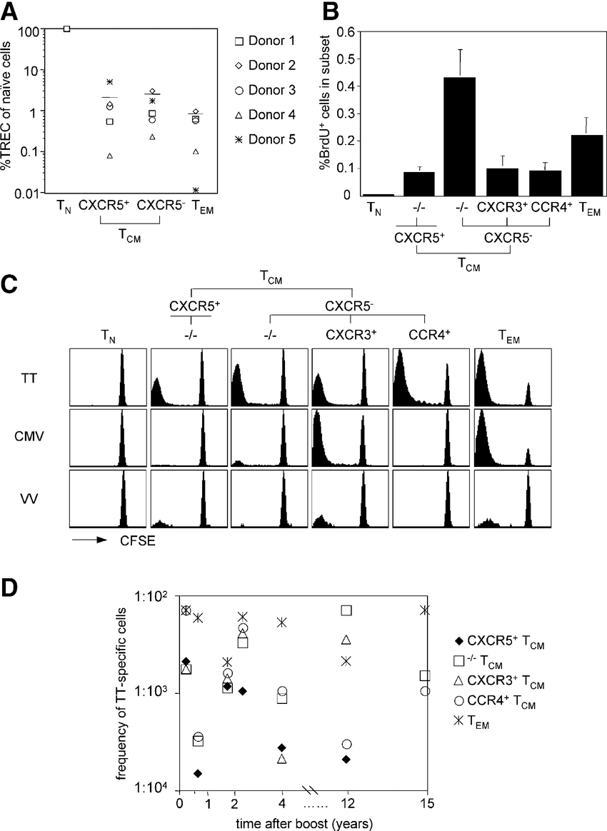 medium resolution of proliferation history in vivo turnover and recall responses of cd4 memory t cell subsets