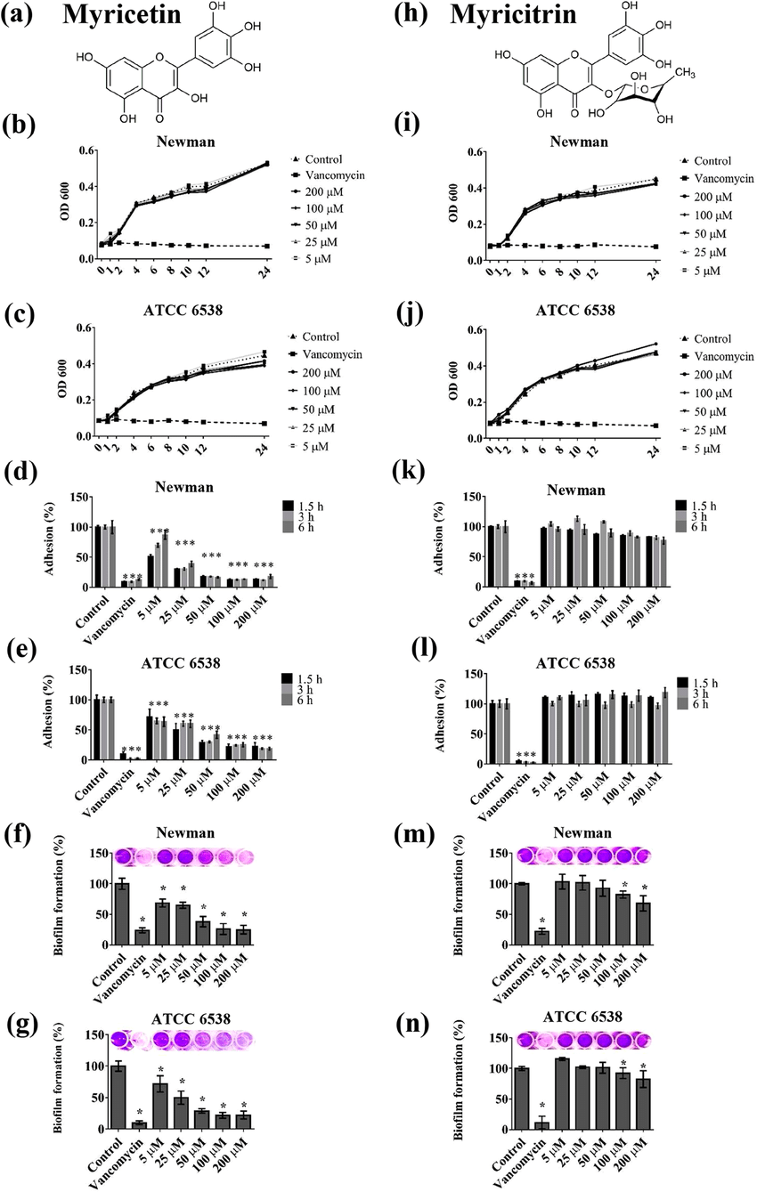 Effects of Myricetin (Myr) and Myricitrin (Myr-gly) on S
