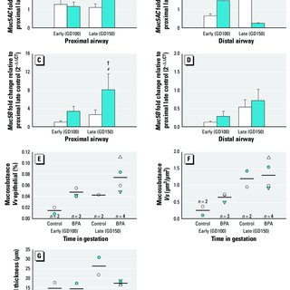 Effect of BPA exposure on proximal epithelial