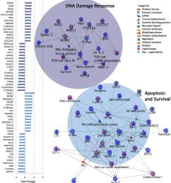 dysregulated gene expression in top two metacore map folders in autism download scientific diagram [ 850 x 933 Pixel ]