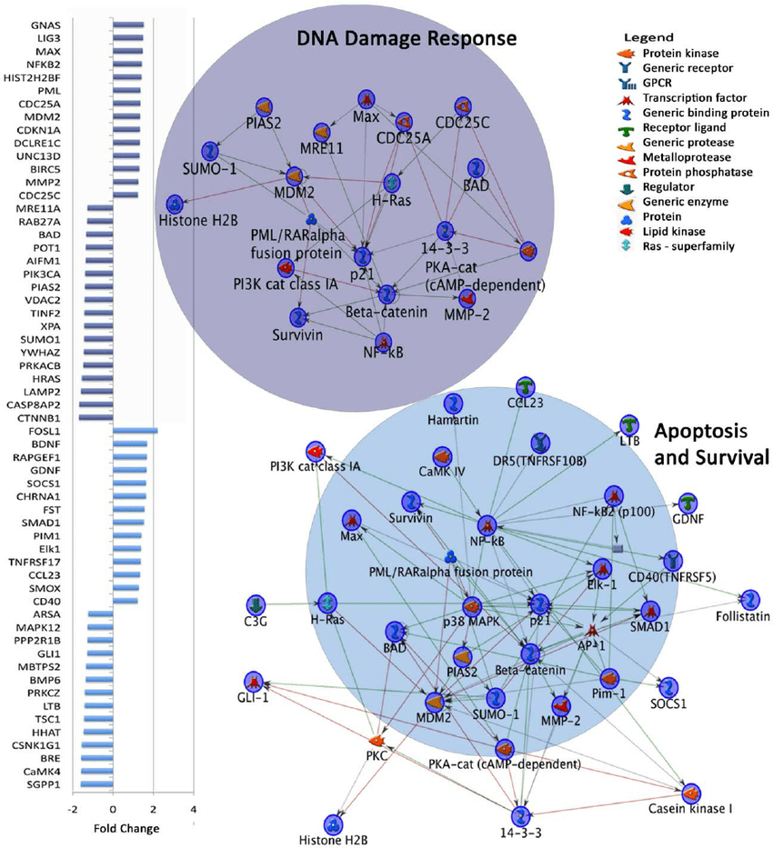 hight resolution of dysregulated gene expression in top two metacore map folders in autism download scientific diagram
