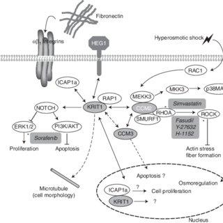 (PDF) Vascular Anomalies: From Genetics toward Models for