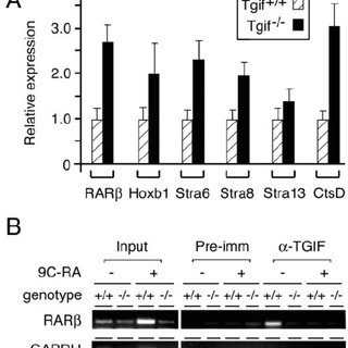 Repression of DR5-mediated transcription by TGIF. HepG2