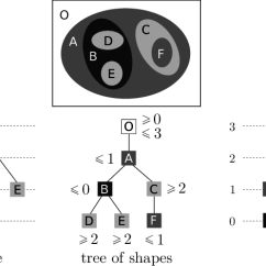Morphology Tree Diagram 7 Wire Trailer Wiring Dodge Three Morphological Trees Of The Same Image Download Scientific