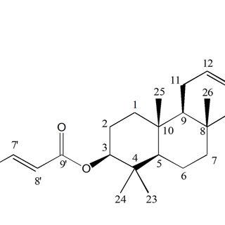 (PDF) Pseudomonas aeruginosa Biofilm Formation and