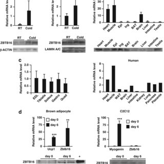 Zbtb16 expression increases mitochondrial respiration