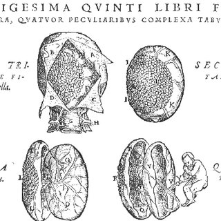 (PDF) Some historical aspects of understanding placental