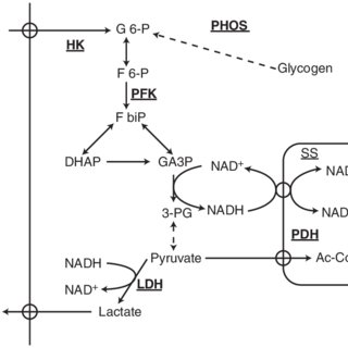 1 Schematic of the rest to exercise transition showing the