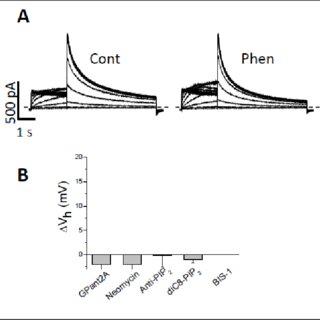 (PDF) Mechanisms of IhERG/IKr modulation by alpha1