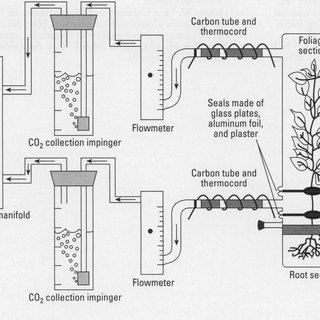 (PDF) Phytoremediation of Trichloroethylene with Hybrid