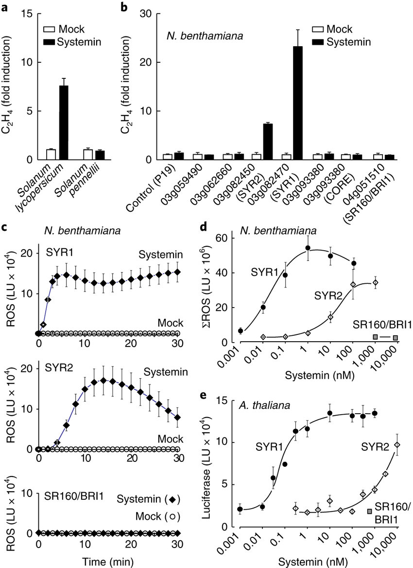 medium resolution of the tomato genes syr1 solyc03g082470 and syr2 solyc03g082450 provide responsiveness to systemin when heterologously