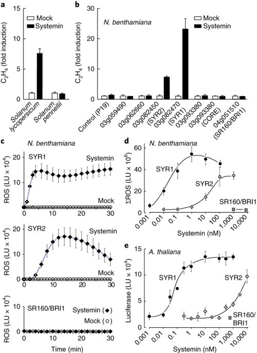 small resolution of the tomato genes syr1 solyc03g082470 and syr2 solyc03g082450 provide responsiveness to systemin when heterologously