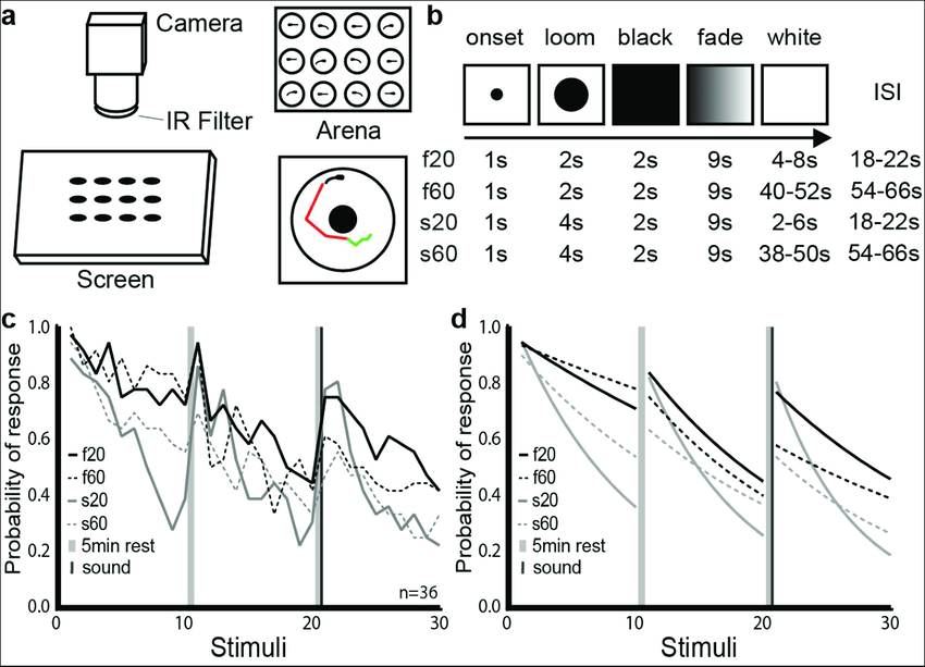 Modulation of habituation by stimulus features. a