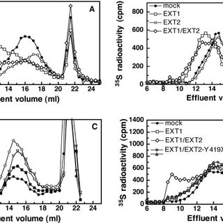 Effect of RNA interference of EXT1, EXT2, or EXTL3 on