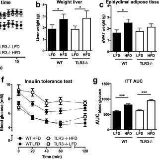 TLR-3 deficiency does not ameliorate adipose tissue