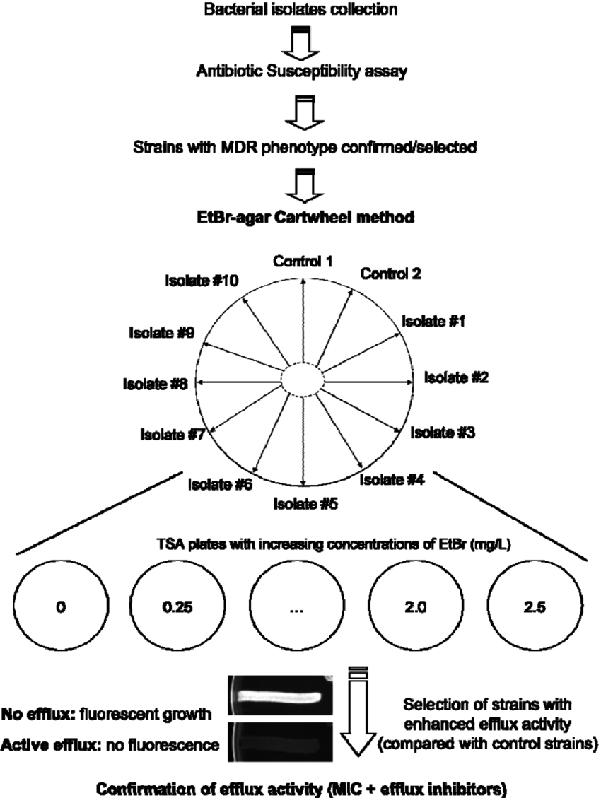 Flowchart followed to test bacterial strains using the