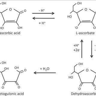 Sample preparation for plasma total vitamin C analysis by