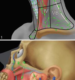 head and neck lymph node groups of the facial area including the parotid buccofacial [ 850 x 1710 Pixel ]