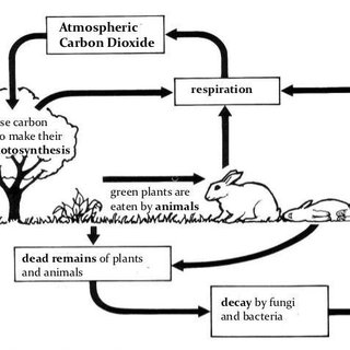 The basic carbon cycle. Houghton considers that Because
