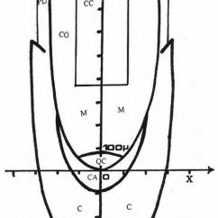 Onion Root Tip Diagram 2002 Mercury Mountaineer Radio Wiring Morphogenic Scheme Of In The Cartesian Coordinate System Meristem M