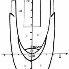 Onion Root Tip Diagram 240sx Stereo Wiring Morphogenic Scheme Of In The Cartesian Coordinate System Meristem M