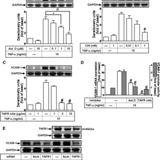 TNF-α induces VCAM-1 expression in HCFs. a Time and