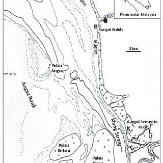 (PDF) Feeding biology of Eel Catfish Plotosus Canius