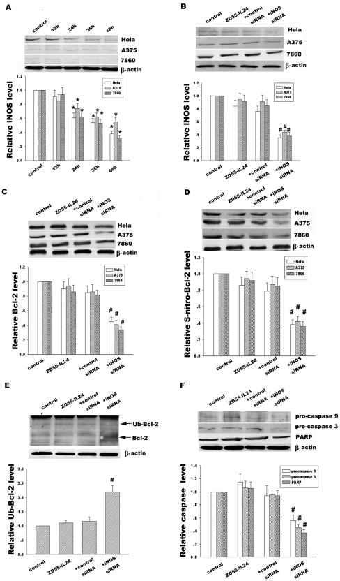 MDA-7/IL-24 Induces Bcl-2 Denitrosylation and Ubiquitin
