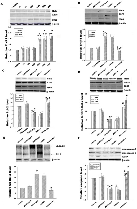 MDA-7/IL-24 Induces Bcl-2 Denitrosylation and Ubiquitin